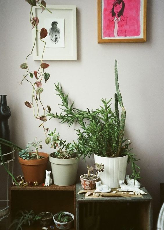 DECORATING WITH PLANTS | Tumblr