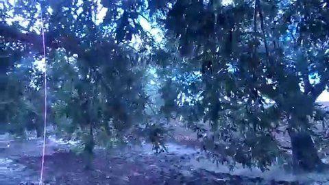 في ظل شجرة زيتون Plants Tree Outdoor