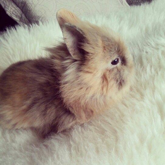 Baby bunny . #littlerabbit #babybunny #solovely