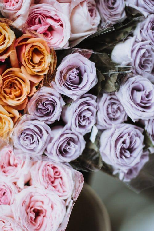 باقة ورد جميلة باقات ورد صباحية جميلة جدا باقة ورد كبيرة Zina Blog Beautiful Roses Flowers Rose