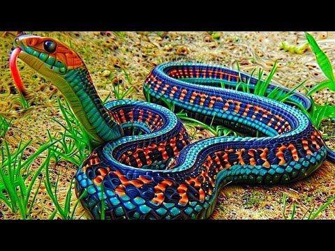 132 As 10 Cobras Mais Lindas Do Mundo Youtube Animais Belas