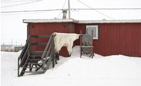 A polar bear skin hangs outside a house