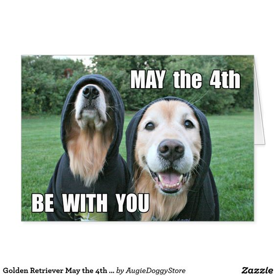 May The 4th Be With You Birthday: Golden Retriever May The 4th Be With You Parody Card By