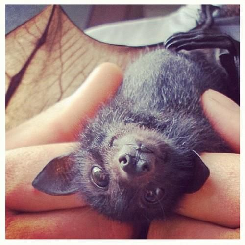 happy_bat