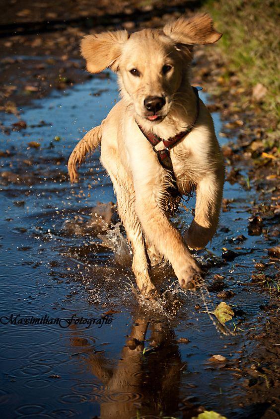 running dog - Bild & Foto von Maxii01 aus Tierkinder - Fotografie (29390717)   fotocommunity