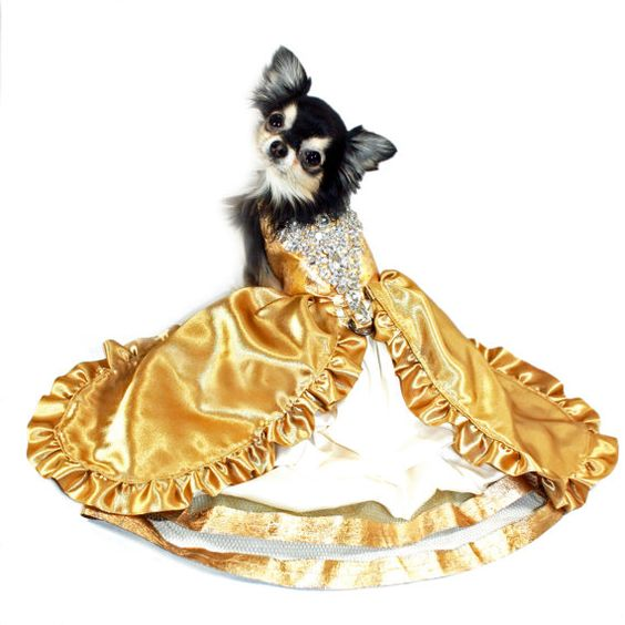 Gold 24 Karat Dog Harness Dress with Bling  DETAILS - Beautiful satin fabric bodice with hand applied gold leaf sheets. Very time consuming process but