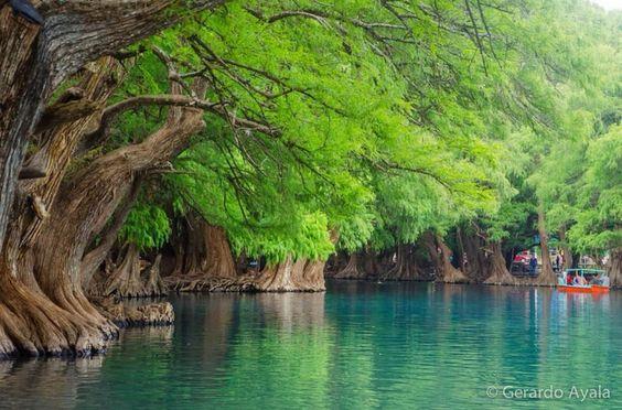 Árbol en Lago Camecuaro