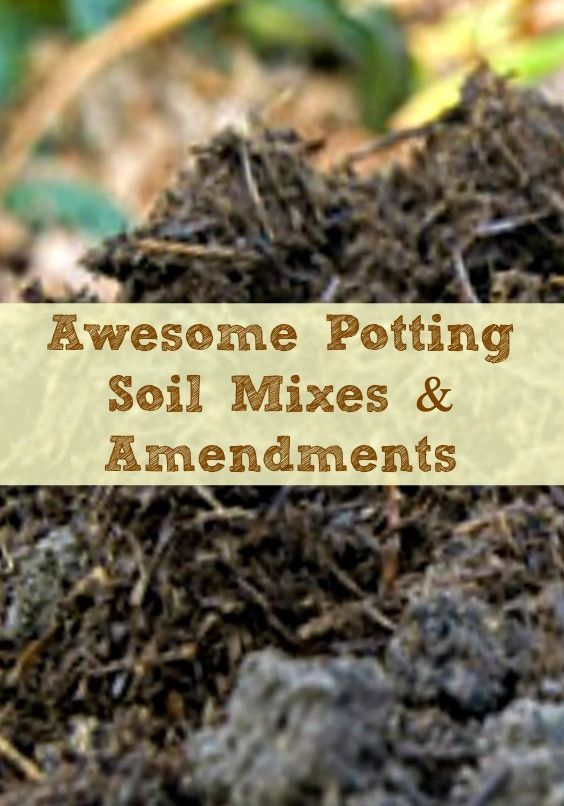 Awesome potting soil mixes and amendments for your garden for Garden soil or potting soil