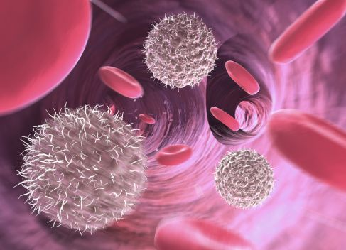Lymphocytes And Red Blood Cells In Blood Vessel Computer Generation Stock Photo 121780705