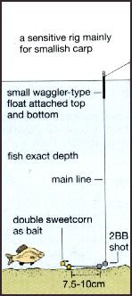 match fishing a.k.a / float fishing(stalking carp) - match, pole, Hard Baits