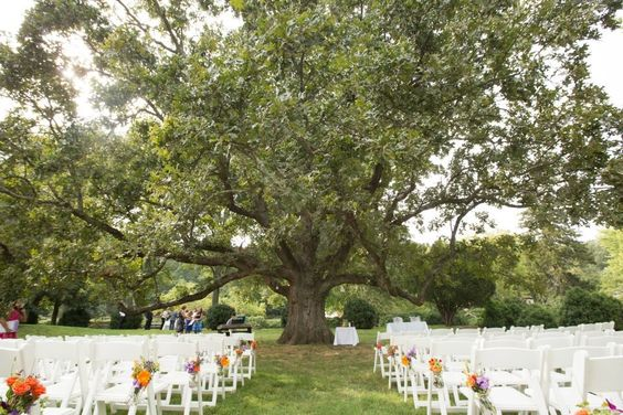 An outdoor wedding ceremony under a gorgeous tree. From a DIY pruple & orange, rustic Northern Virginia wedding. Images by Kristi Odom Photography.
