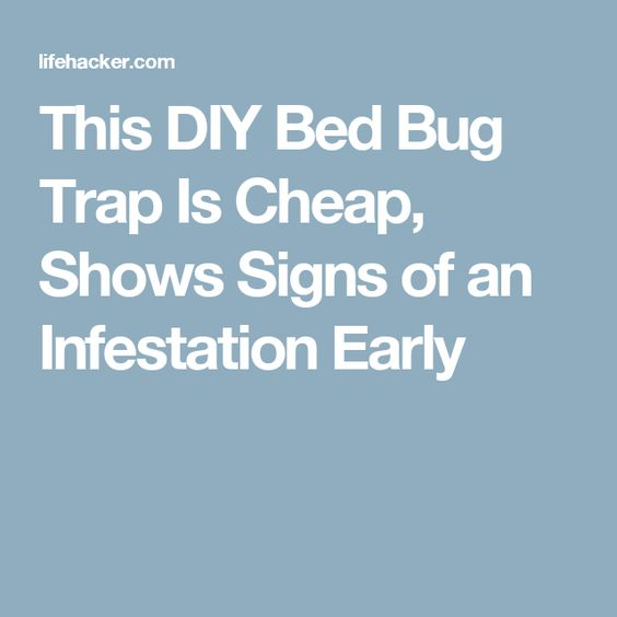 This DIY Bed Bug Trap Is Cheap, Shows Signs of an Infestation Early