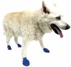 Resultado de imagem para cachorro raças