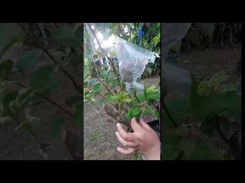 Cara Mengawinkan Bunga Kertas Youtube Bunga Kertas Bunga Kertas