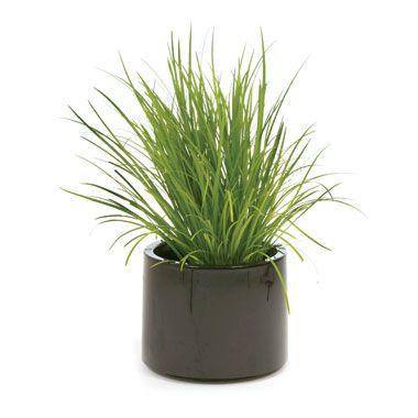 Image result for lilyturf indoor