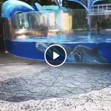 Golfinhos querendo amizade com esquilos.