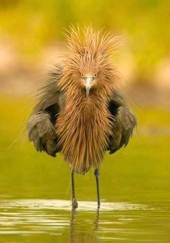 Angry Bird.....