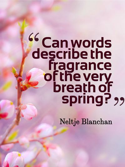 Can words describe the fragrance of the very breath of spring? -Neltje Blanchan-: