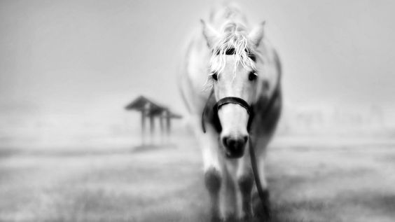 черно белые фото женщины и природа деревья трава: 18 тыс изображений найдено в Яндекс.Картинках