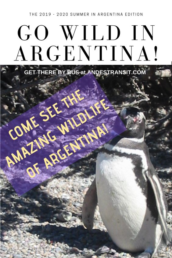 See Wildlife of Argentina (Pinterest)