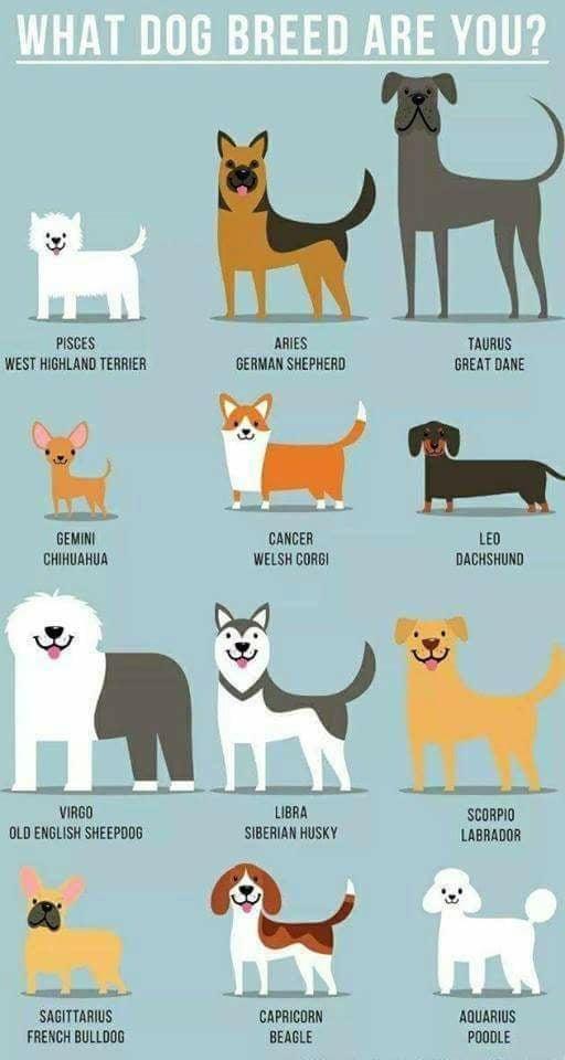 Horoscope Memes Quotes Dog Zodiac Zodiac Signs Animals Zodiac Signs Astrology