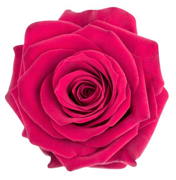 Vinilo pared Rosa para el Principito