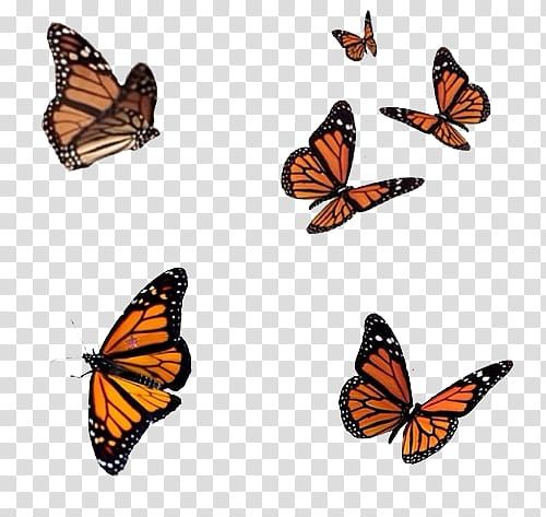 Monarch Butterfly Png Image With Transparent Background Png Free Png Images Butterfly Clip Art Transparent Background Abstract Art Wallpaper