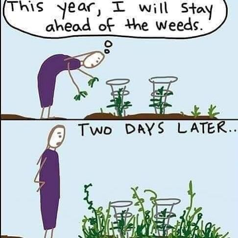 The Weeds Are Getting Out Of Control In My Garden How About Yours Gardening Weeding Gardening Quotes Funny Gardening Memes Gardening Humor