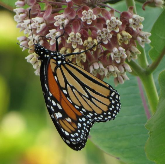 """""""flutter"""" from the latest installment of my letter themed photo post series"""