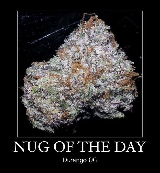 Nug of the day