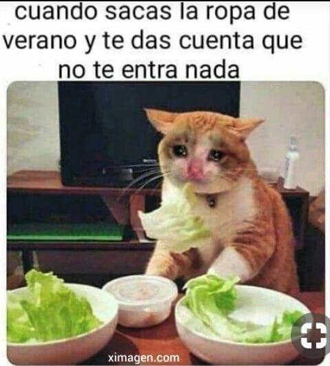 Dieta Ya Llevo 2 Horas Y Lo Noto Memes Divertidos Humor En Espanol Memes Nuevos