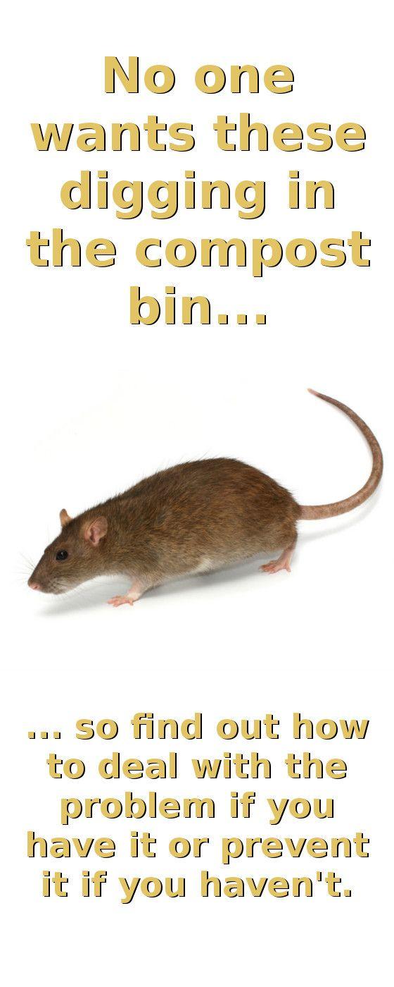 aeae268d2b2b81d56c606eb6b752e51b - How To Get Rid Of Mice In Compost Bin