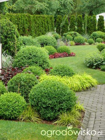 Ogród mały, ale pojemny;) - strona 125 - Forum ogrodnicze - Ogrodowisko