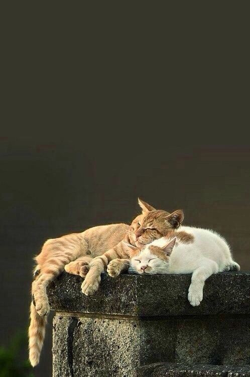 Orange and White Gatos