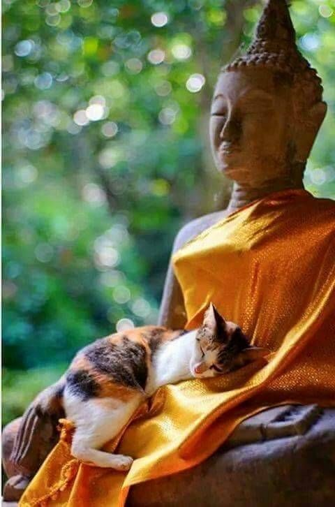 life is a state of mind for buddha cat...... ♥: