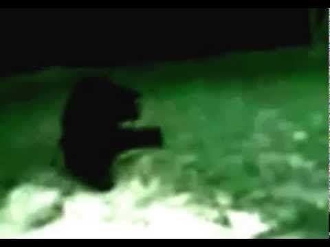 Real Werewolf Sighting #real #werewolf #werewolves | When ...