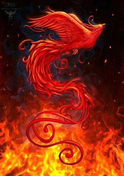 Ave Fénix / Phoenix Bird