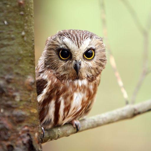 Owl forum com