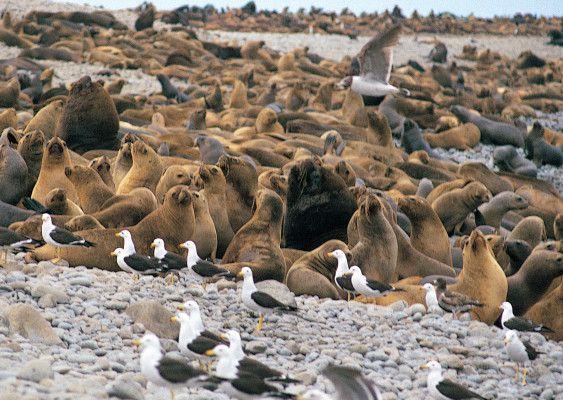 La Reserva Nacional de Paracas tiene por objeto proteger y cuidar las especies animales y vegetales en vías de extinción o en peligro, y preservar las condiciones ecológicas muy peculiares http://www.machupicchu-tours-peru.com/blog/paracas/reserva-paracas