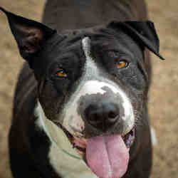 Available Pets At Maricopa County Animal Care Control West