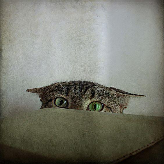 I is hiding.