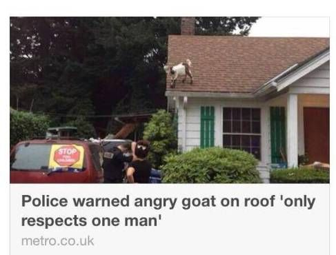 #goatvet says the article states the goat was eventually rescued when its owner came home