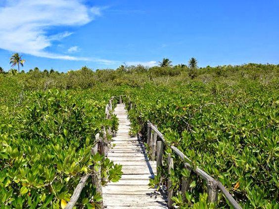 #Tulum Senderos en el manglar. Feliz fin de semana!