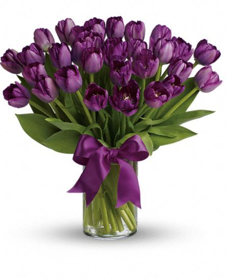 Purple Tulip Flower