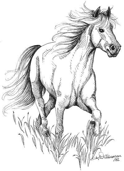 Quick Ink Sketch Of A Horse Cavalos Pintados Desenhos Para