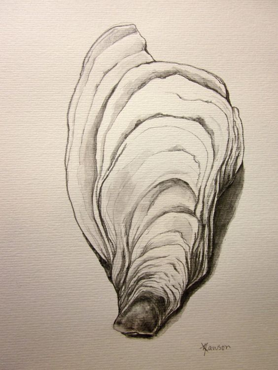Drawing Lines With Pencil : Oyster shell original pencil drawing a size well