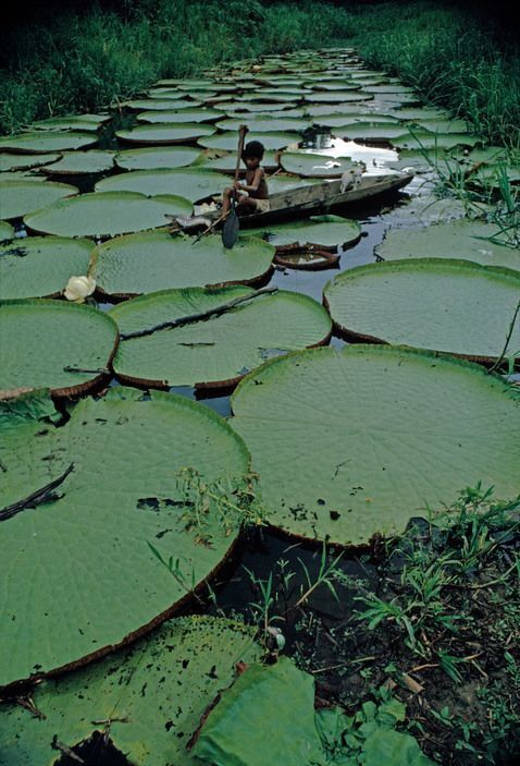 Amazonas Mi Mente Arde Contigo Com Imagens Floresta Amazonica
