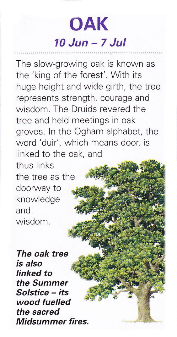 Sacred Celtic trees Oak: