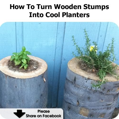 Turn Wooden Stumps Into Planters