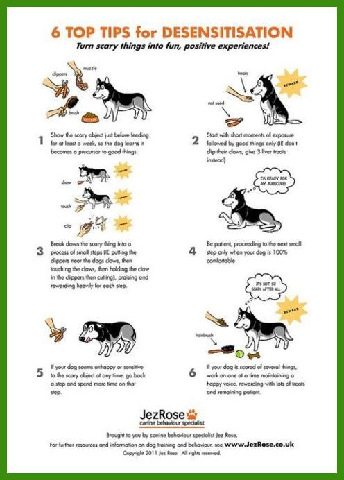 Secrets To Dog Training Review It Certainly Helped With My Dog